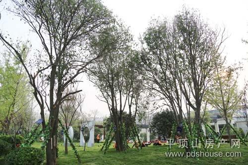 树木撑起豪门华盖-房产